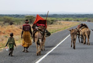A nomadic Rendille family moves to a new home along with its herd of camels and mules.