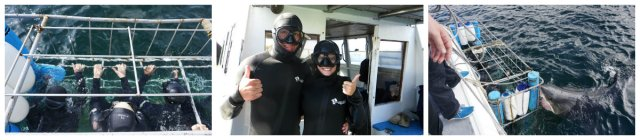 Great White Shark, cage diving, White Shark Africa, Mossel Bay, South Africa