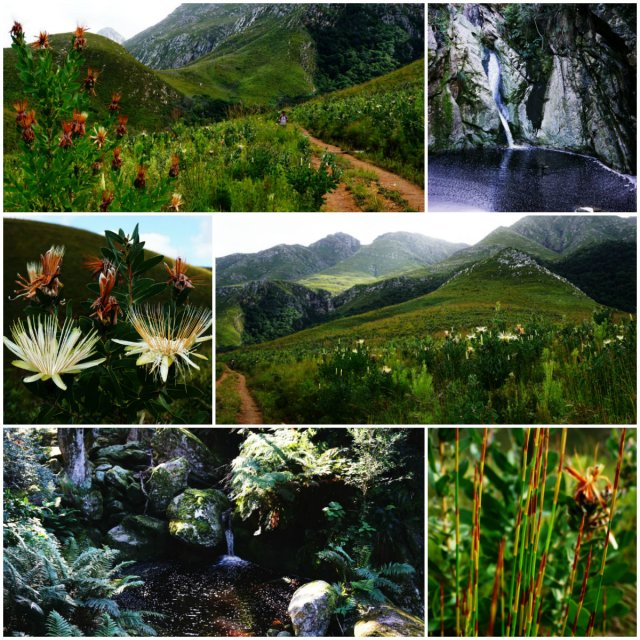 Marloth Nature Reserve, Swellendam, hiking South Africa, South Africa, road trip