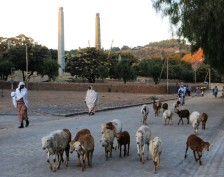 Ethiopia, Northern Stelae Field, Aksum, goats,