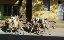 mules, donkeys, livestock, Africa, Ethiopia, Dire Dawa
