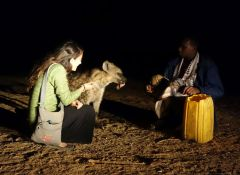 Elizabeth Around the World, Elizabeth McSheffrey, Hyenas of Harar, Harar, hyenas, Ethiopia, Ethiopia tourism, Hyena man, Harar tourism