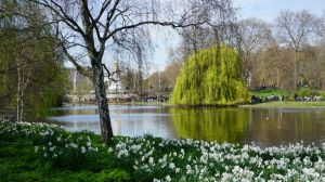 St James's Park, pelicans, London, Buckingham Palace, Birdcage Walk