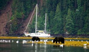 Great Bear Rainforest, Mussel Inlet, grizzly bear, Elizabeth McSheffrey, Bluewater Adventures, Island Odyssey