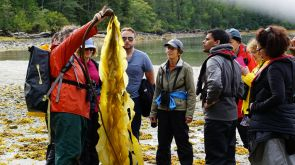 Caroline Fox, bull kelp, National Observer, Elizabeth McSheffrey, Great Bear Rainforest, Home Bay