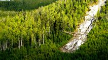 logging, Great Bear Rainforest, Gribbell Island, B.C. forestry
