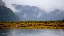 Mussel Inlet, Great Bear Rainforest, kelp
