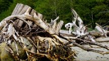 Home Bay, Great Bear Rainforest, logging, B.C. forestry