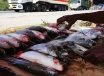 fish, Kimara, Dar es Salaam, Tanzania, Tanzanian food