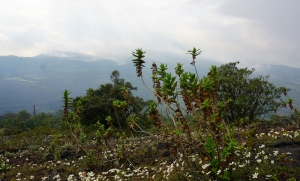 Pacaya Volcano, Antigua, Antigua tourism, things to see in Antigua, hike Pacaya Volcano, Bigfoot Hostel, Guatemala itinerary, tourism Guatemala, Elizabeth McSheffrey, Elizabeth Around the World, Elizabeth McSheffrey journalist